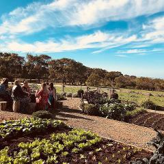 Explore Geelong's Wine Region