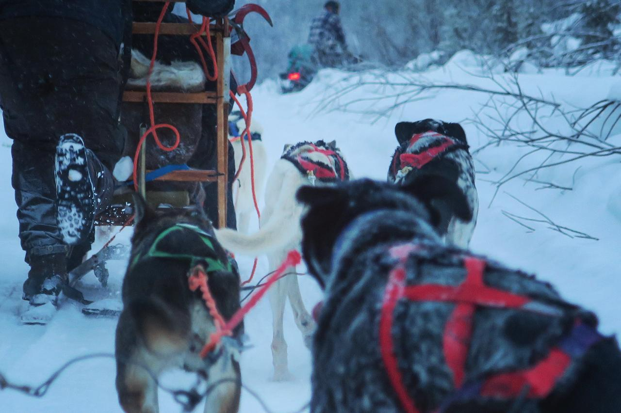 Dogsledding: Mushers story - Ride with the guide (DEC-MARCH)