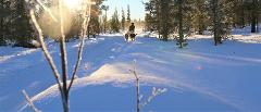 Dogsledding: Mushers story - Ride with the guide