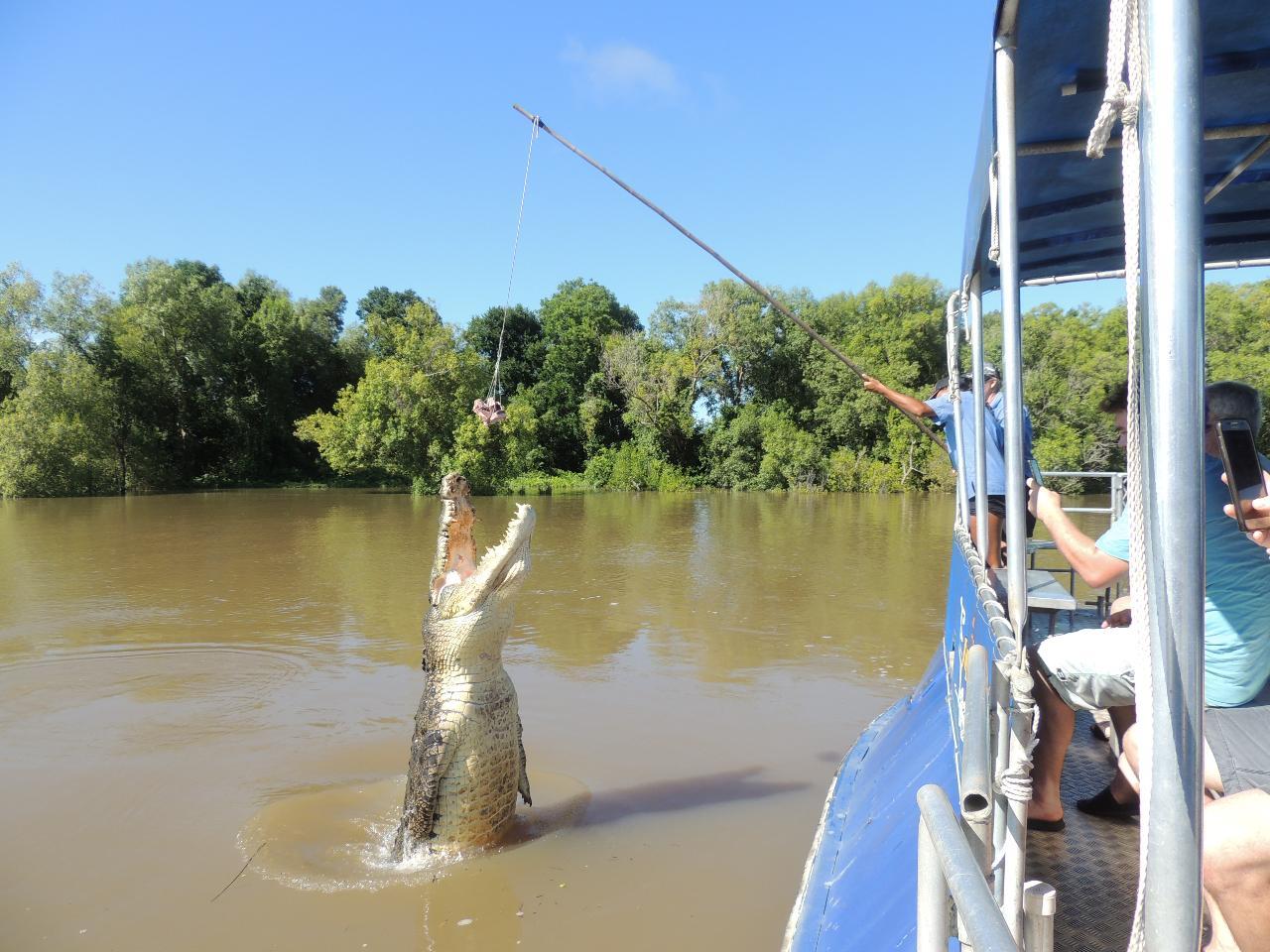 1. Jumping Crocodile Cruise - 1 hour