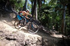 Redwoods Mountain Biking Tour