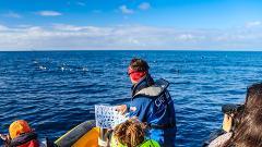 Marine Birdwatching Expedition