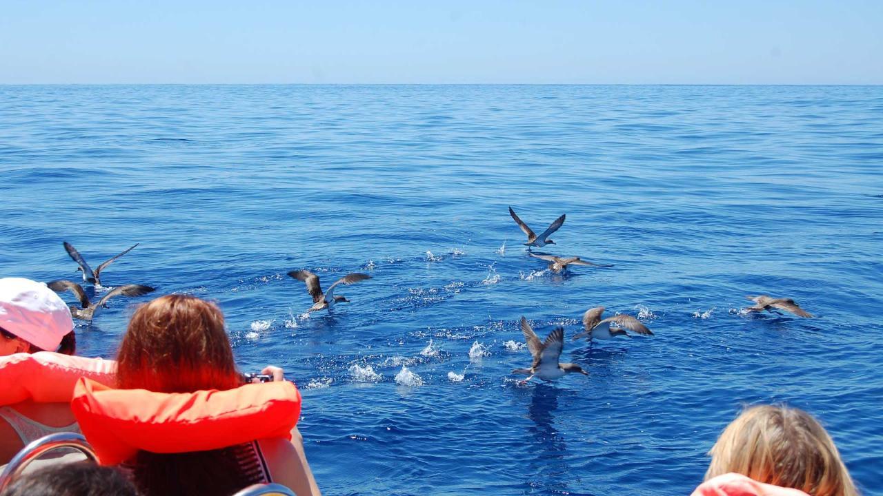 Sea Bird Watching & Islet Boat Tour