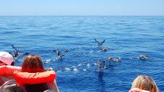Marine BirdWatching & Islet Boat Tour