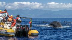Whale Watching & Islet Boat Tour