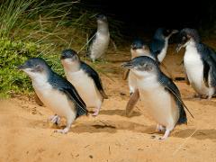 Penguins & PIE pass