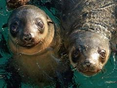 Seals & PIE Pass