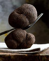 July Cooking School - Truffle Preservation and Care