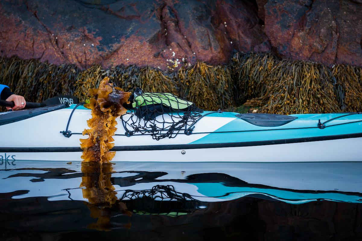 Tångpaddling & snorkel safari / Sea Kayak Sea Weed Safari