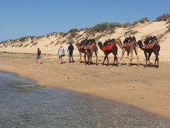 Afternoon Camel Riding Tour - Exmouth