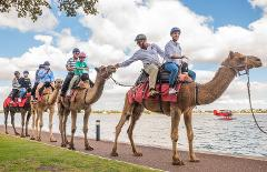 Gift voucher - Riverside & Elizabeth Quay Camel Riding Tour - Adult