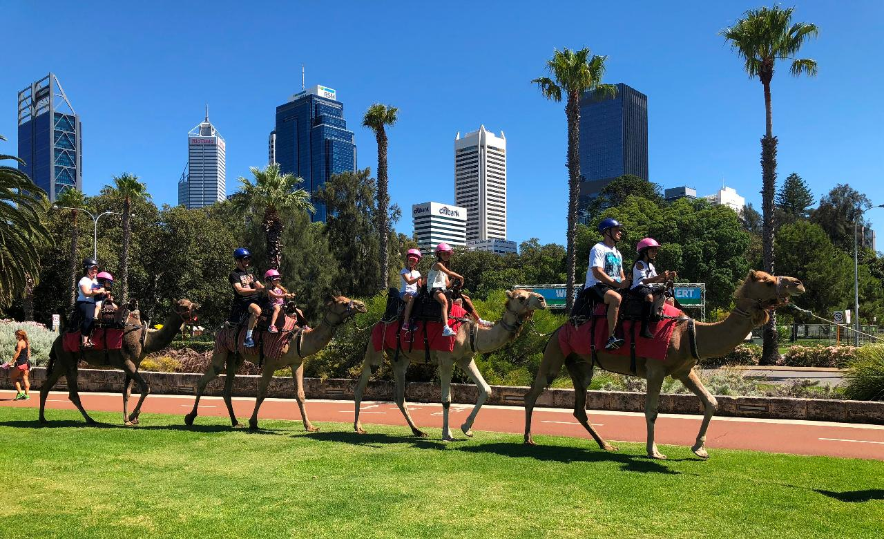 Riverside & Elizabeth Quay Camel riding Tour