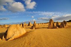 Pinnacles, Lancelin Sand Dunes & Koalas Day Tour (Muslim-friendly tour)