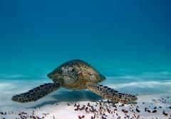 Turtle & Reef Adventure