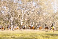 2 Hour - Horse Riding Tour - Woodlands Historic Park