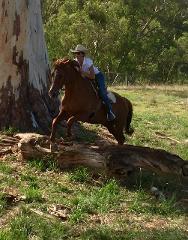 2 Hour - Advanced Horse Riding Tour - Woodlands Historic Park