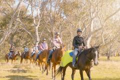 1 Hour - Horse Riding Tour - Woodlands Historic Park