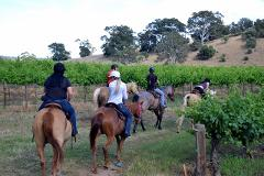 Vineyard Journey