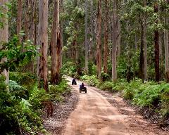 FOREST EXPLORER TOUR (Driver Only or Driver with Passenger)