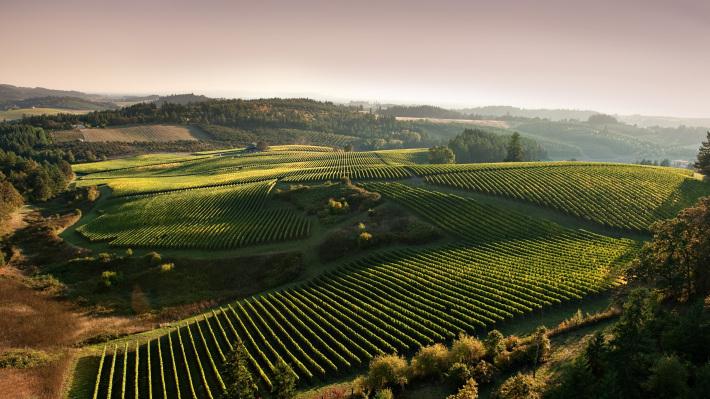 Wine Tasting in Northwest Grandeur