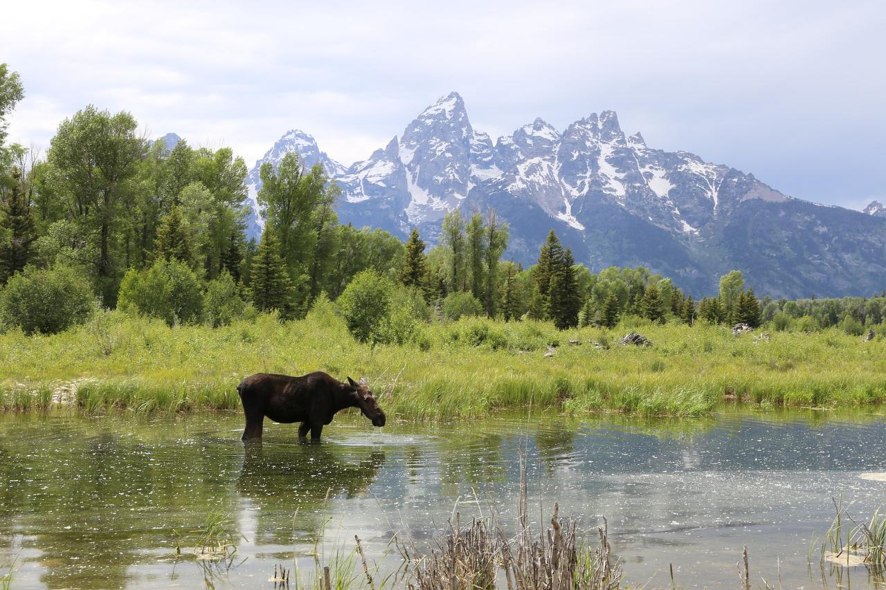Alpine Wonders of Yellowstone and Grand Teton Bozeman to Jackson
