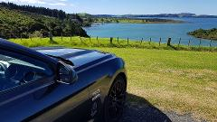 "Private Mustang Excursion of the Bay of Islands 4.5 Hour ""THE MUSTER"""