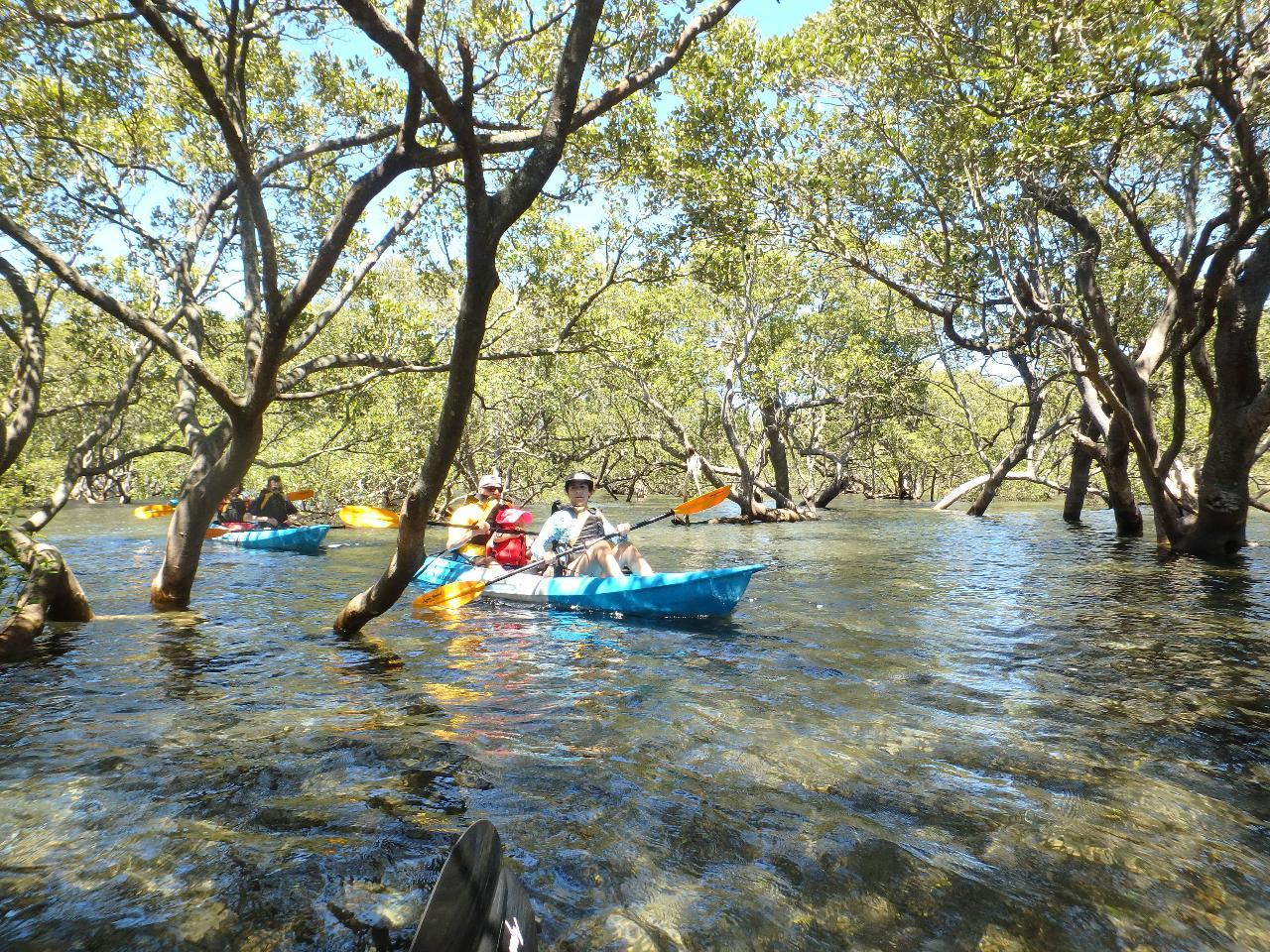 Guided Sit On Top Kayak Tour, Huskisson