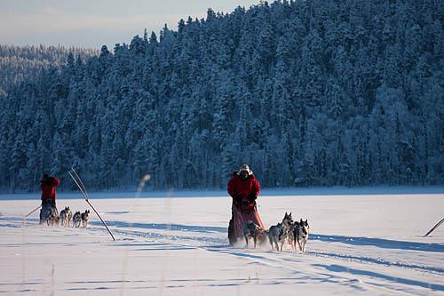 Dog sledding Adventure and Northern lights