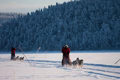 Dog sledding Adventure and Northern lights