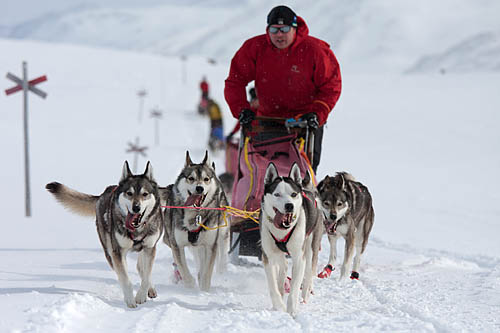 Crossing Lapland with dog sled