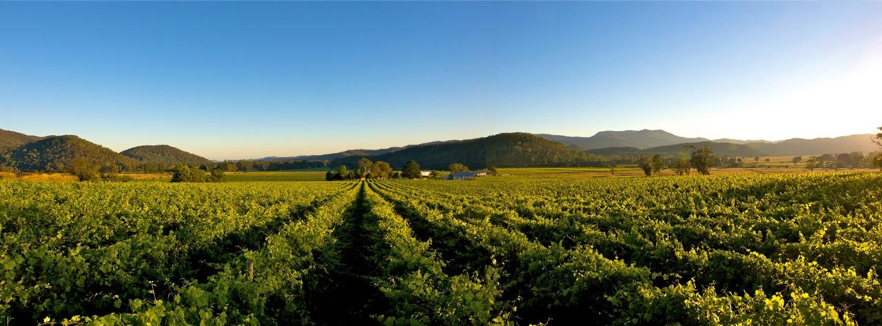 King Valley and Milawa Wine Tour (Private tour)
