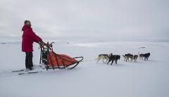Overnight husky expedition