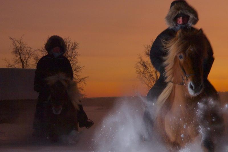 Northern lights tour on horseback