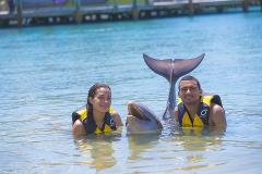 Royal Dolphin Swim at Ocean World – Full Day
