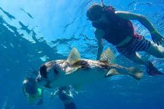 Sosua Bay Snorkeling Tour – Half Day