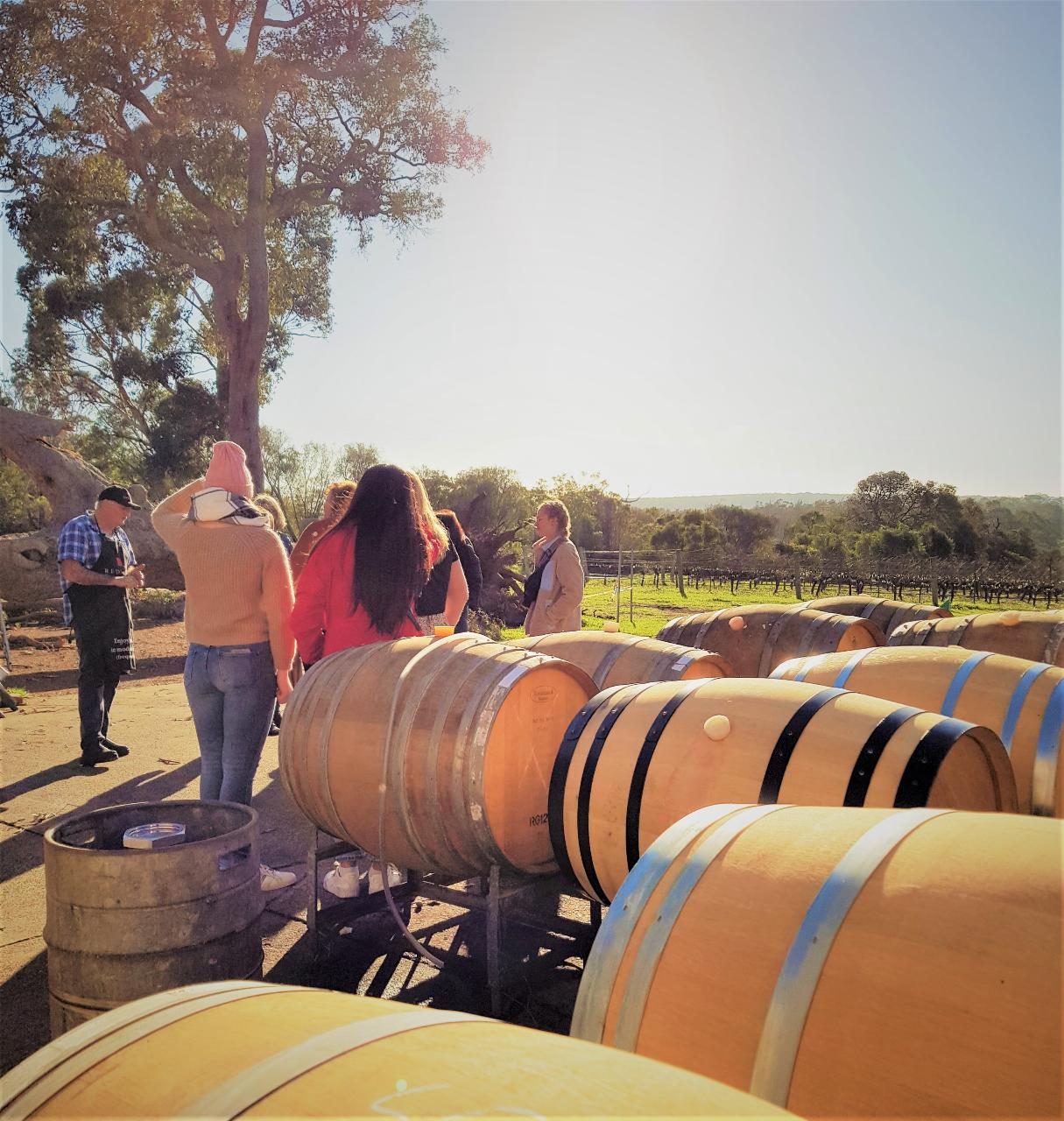 5 Hour Half Day Tour: Coffee & Olive Tastings, Wineries, Forest & Lunch
