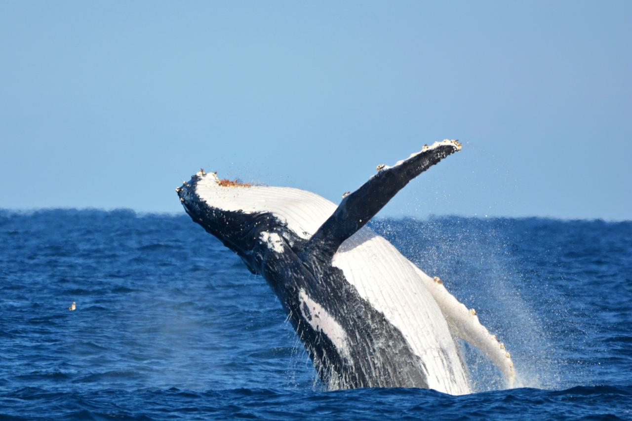7 HOUR WHALE WATCHING, LIGHTHOUSE & SIGHTSEEING TOUR