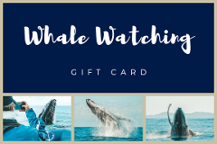 Whale Watching Gift Card