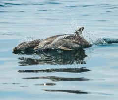 Dolphin Cruise Gift Card