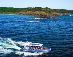 "Byron Bay Dolphin Tour ""Ocean Safari"""