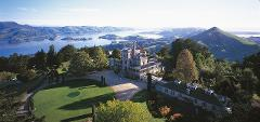 Wildlife, Local History, City and Larnach Castle Tour 1030am