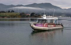 Ferry and admission to Wild Food Webs & Fishy Feasts- NZ Marine Studies Centre, Portobello