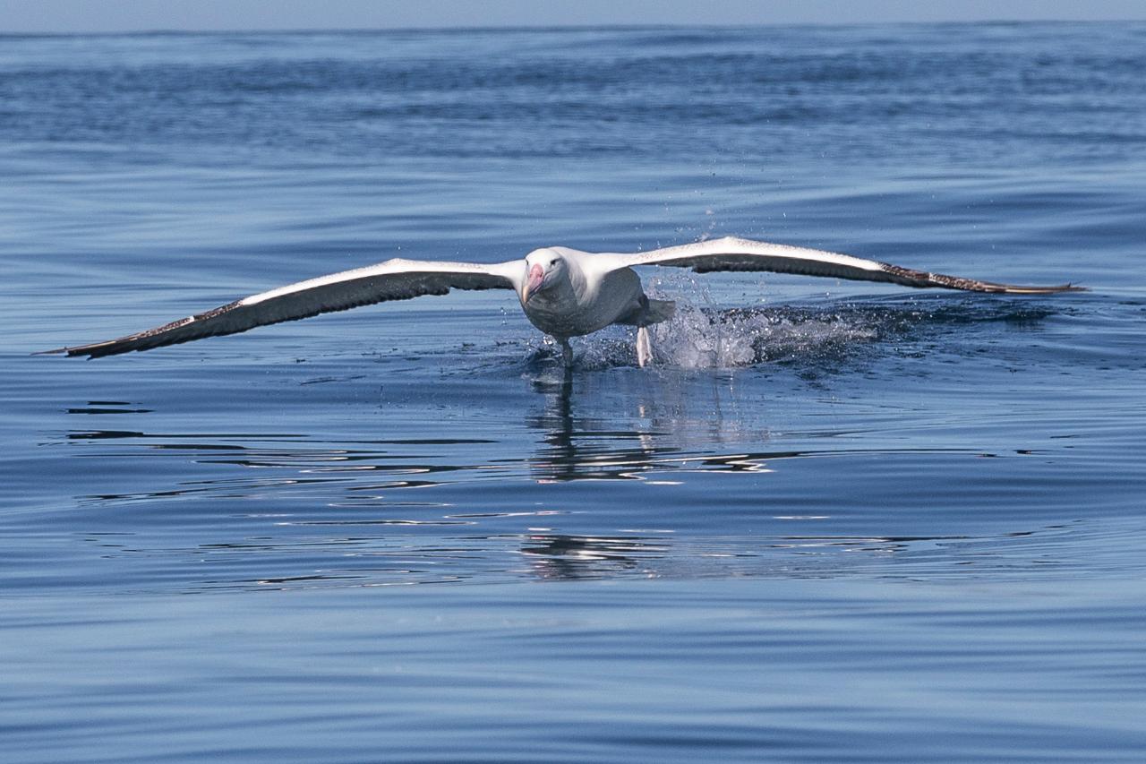 10:15am Albatross Wildlife & Harbour Cruise