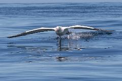 10:15am Albatross Wildlife & Harbour Cruise