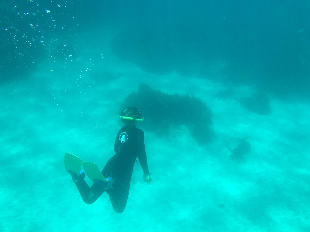 Guided Snorkel Experience Advanced