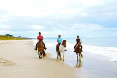 Beach Horse Ride experience from Auckland