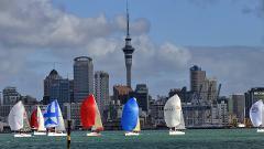 Explore Auckland City Small Group Tour