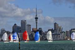 Hamilton to Auckland Transfer