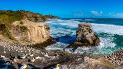 Explore the Wild west coast beaches on a small group tour from Auckland including brewery lunch.