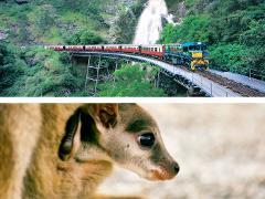 キュランダ列車+大自然動物探検ツアー(星空観測+オージーBBQ)